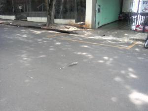 lagartão dando um rolê perto da UEM